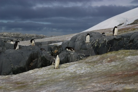 Adelie antarctica cruise sky penguin south pole.