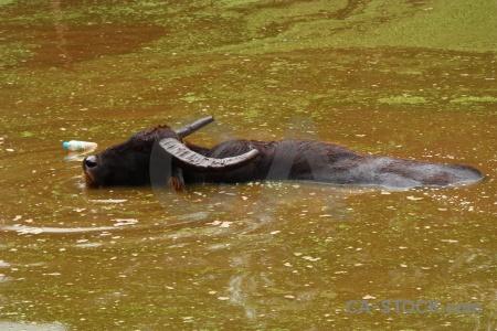 Algae pool plant thailand wat pha luang ta bua.