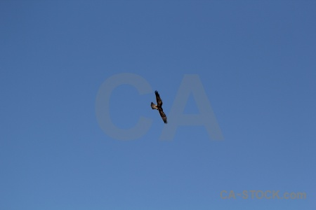 Altitude animal andes sky south america.