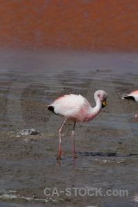 Altitude bird animal lake salt.