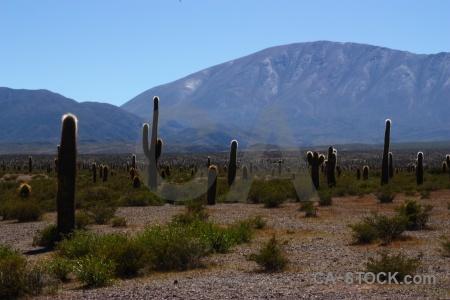 Altitude landscape argentina cactus mountain.