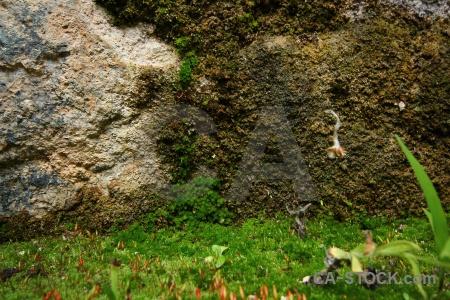 Altitude peru stone plant inca.