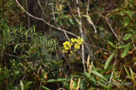 Altitude plant peru inca trail flower.