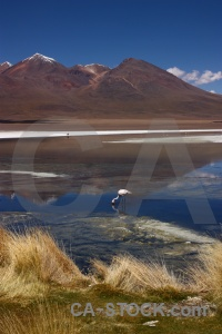 Altitude salt lake bird bolivia water.