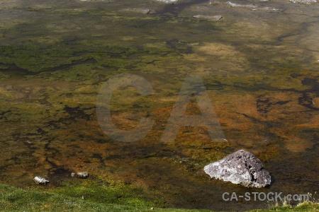 Altitude salt lake plant grass andes.
