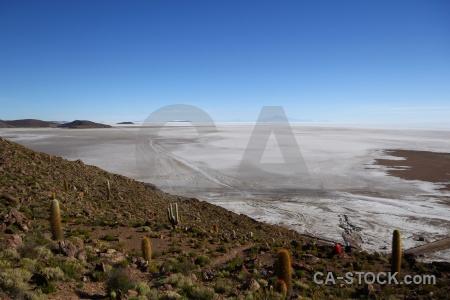 Altitude salt plant landscape andes.