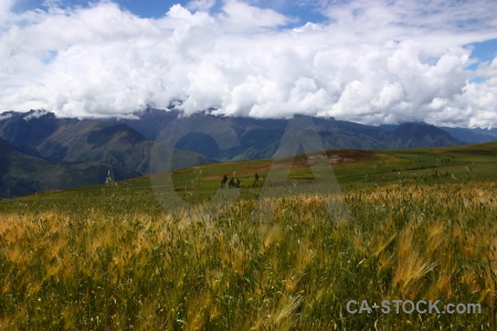 Altitude sky maras bush grass.