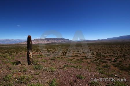 Altitude south america mountain cactus argentina.