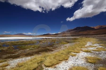 Altitude vicugna bolivia grass landscape.