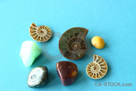 Ammonite object cyan polished stone.