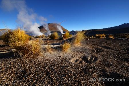 Andes el tatio south america grass atacama desert.
