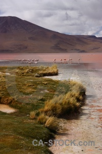 Andes landscape flamingo sky south america.