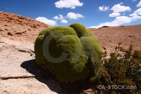 Andes mountain rock cloud bush.