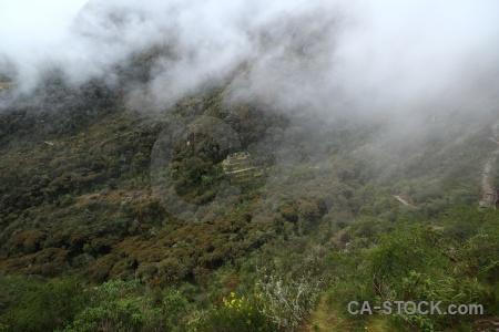 Andes tree altitude qunchamarka peru.