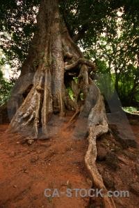 Angkor asia siem reap temple unesco.