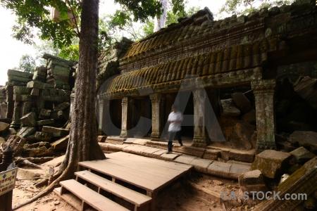 Angkor lichen tree pillar khmer.