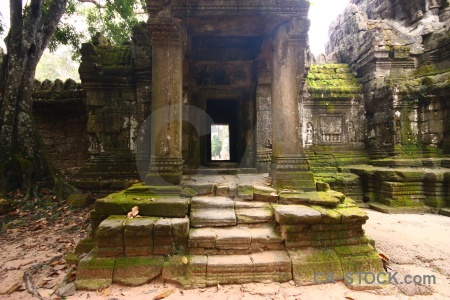 Angkor ruin pillar stone tree.