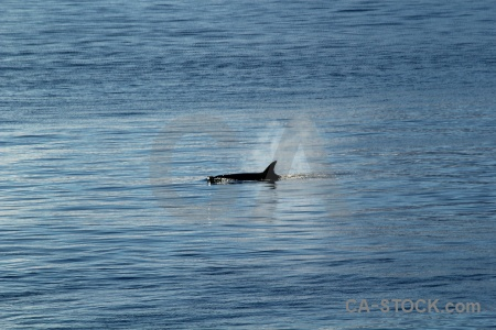 Animal adelaide island south pole day 6 sea.