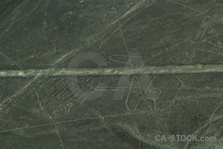 Animal aerial geoglyph flying nazca.