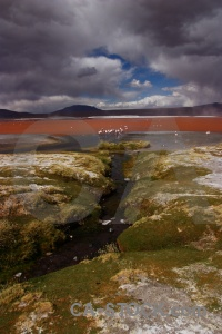 Animal altitude south america salt lake andes.