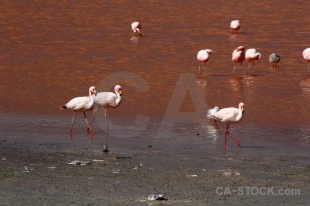 Animal andes lake south america bird.
