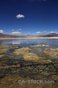 Animal andes landscape grass salt lake.