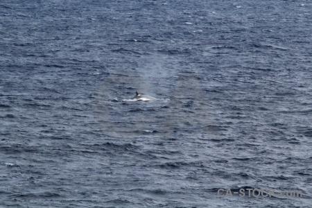Animal antarctica cruise spray drake passage water.