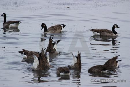 Animal aquatic bird pond water.