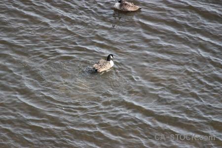 Animal aquatic water bird pond.