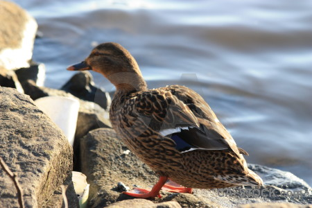 Animal aquatic water pond bird.