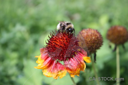 Animal bee plant insect flower.