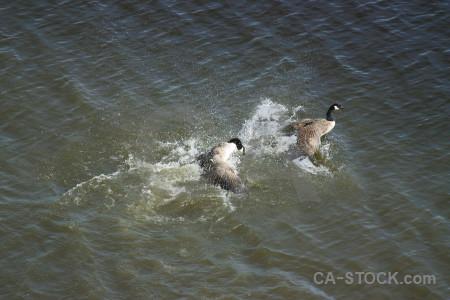 Animal bird aquatic.