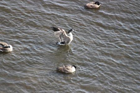 Animal bird aquatic pond water.