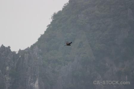 Animal bird asia southeast vietnam.