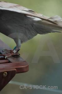 Animal bird dove green pigeon.