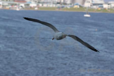 Animal bird flying.