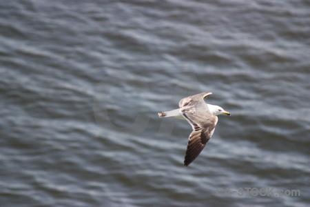 Animal bird flying seagull gray.