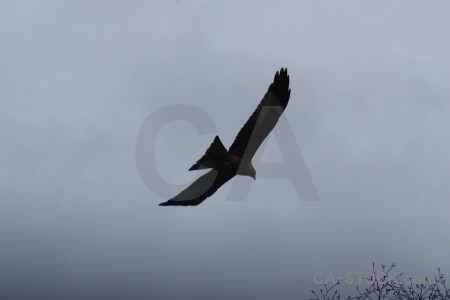 Animal bird flying sky.