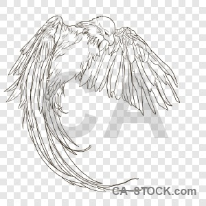 Animal bird sketch transparent.