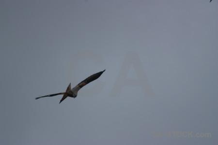 Animal bird sky flying.