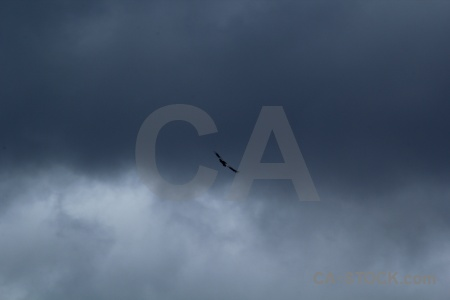 Animal bird south america sky cloud.