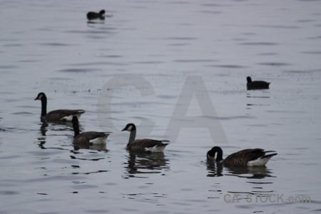Animal bird water aquatic pond.