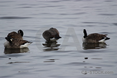 Animal bird water pond aquatic.