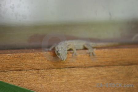 Animal brown lizard reptile orange.
