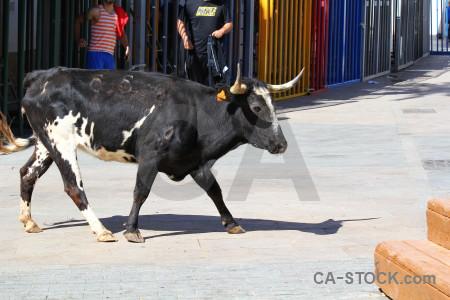 Animal bull running europe javea white.