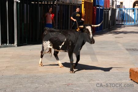 Animal bull running europe spain horn.