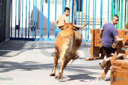 Animal bull running orange spain europe.