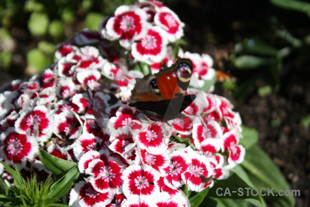 Animal butterfly plant flower insect.