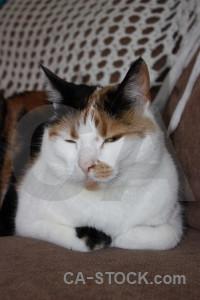 Animal cat.