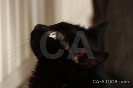 Animal cat black.